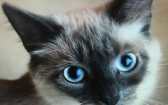 Cutest Pet Photo Contest Winners