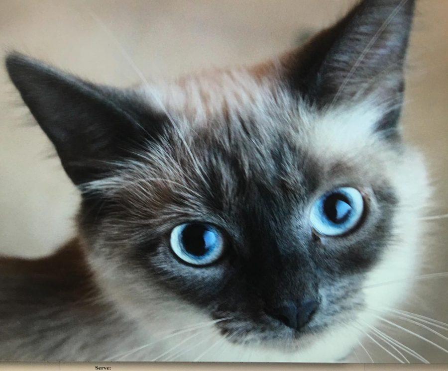 Cutest Pet Photo Contest Winners